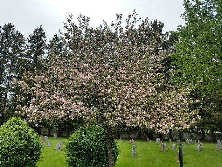 Lauren Hill Cemetery Saco Maine (14)
