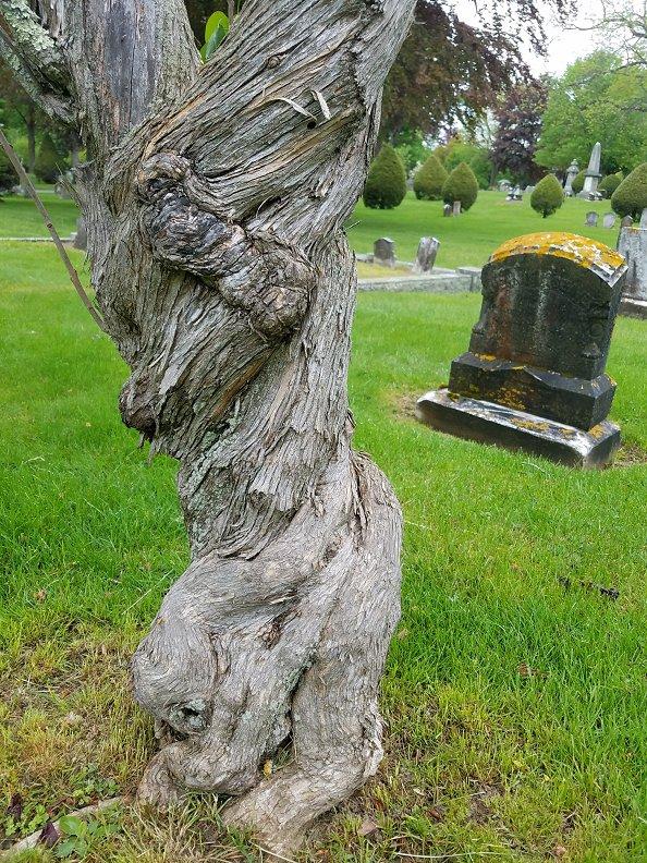Lauren Hill Cemetery Saco Maine (25)