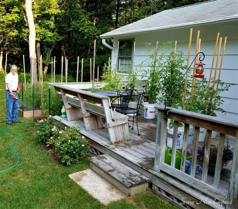 July Garden Update (2)