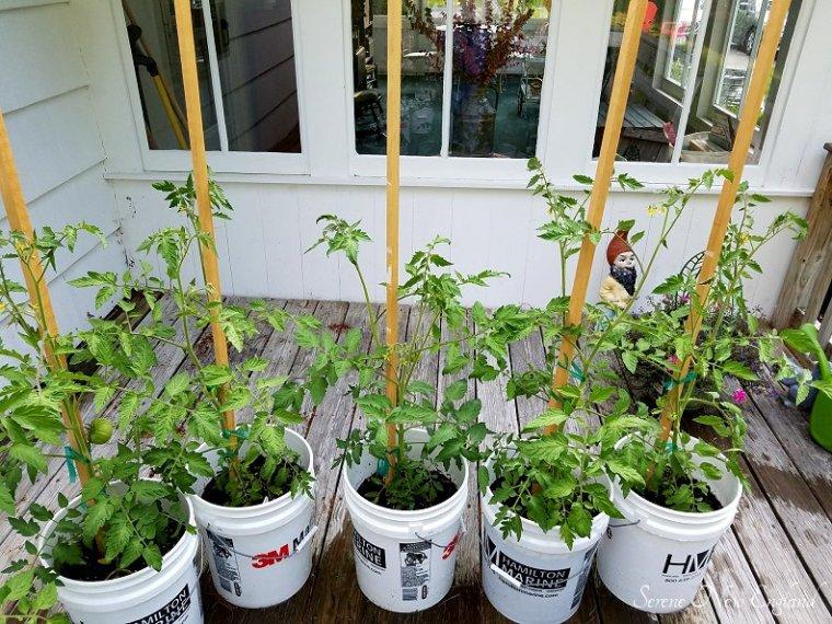 July Garden Update (4)