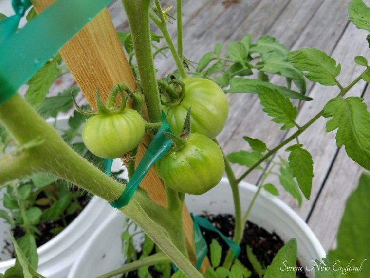 July Garden Update (5)