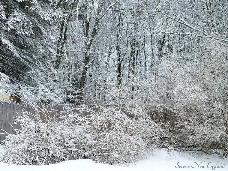 Winter in Maine (1).jpg
