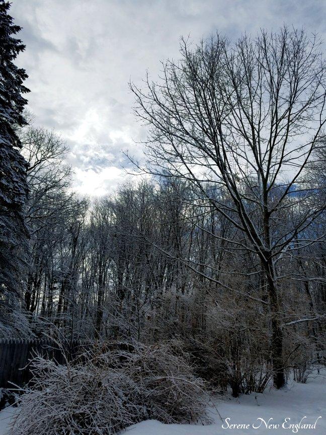 Winter in Maine (4).jpg