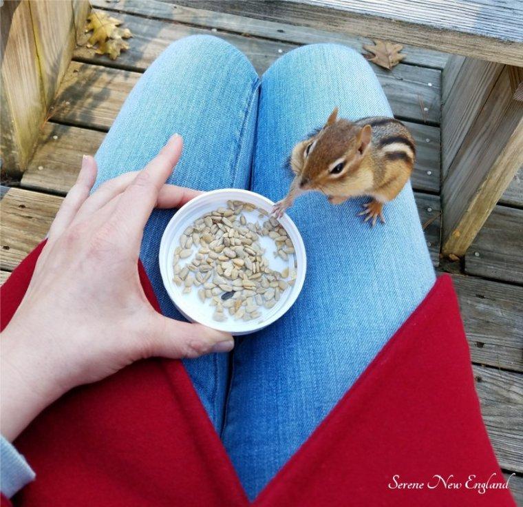 Feeding Chipmunks Wishy the Chippie (9).jpg