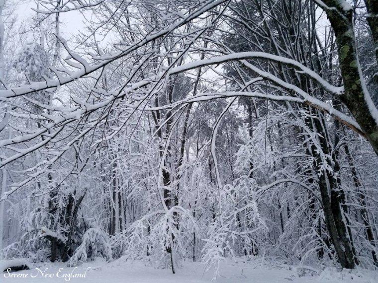Maine March Blizzard Winter Wonderland (1)