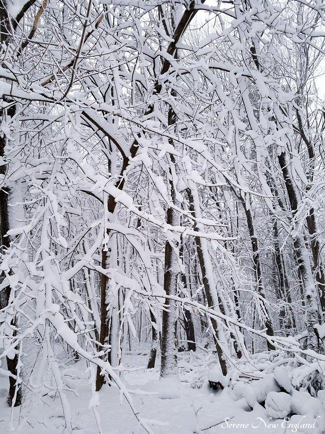 Maine March Blizzard Winter Wonderland (10)