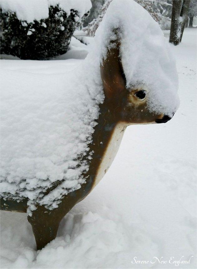 Maine March Blizzard Winter Wonderland (16)