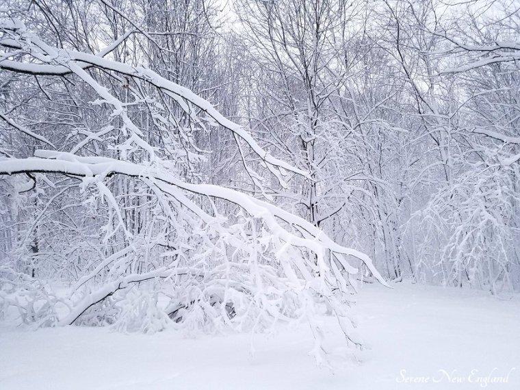Maine March Blizzard Winter Wonderland (3)