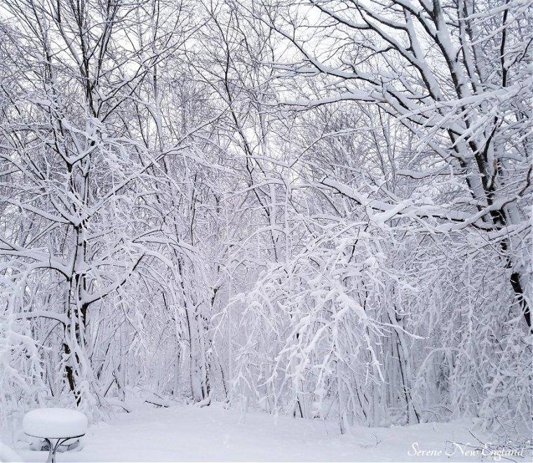 Maine March Blizzard Winter Wonderland (5)