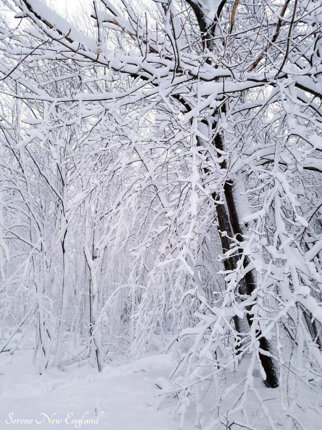 Maine March Blizzard Winter Wonderland (9)
