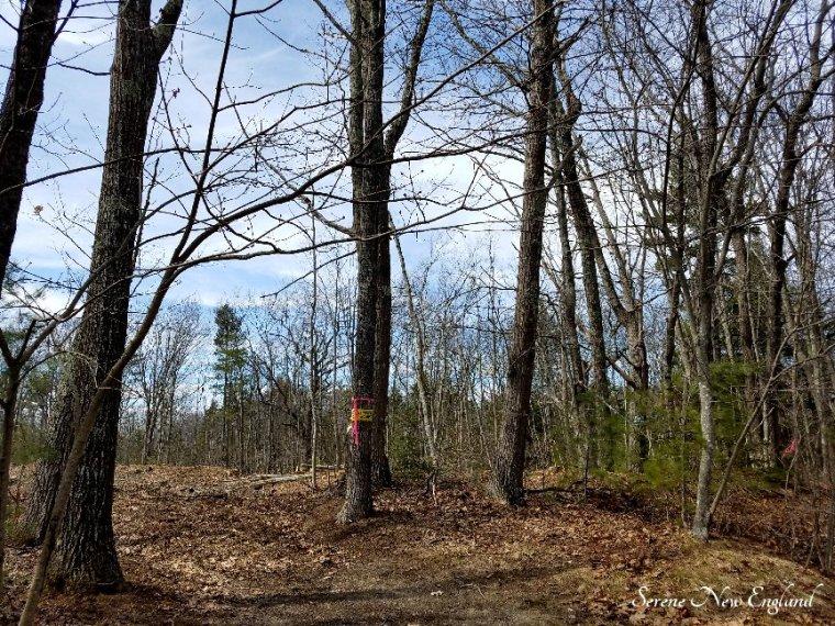 Maine Woods (1)