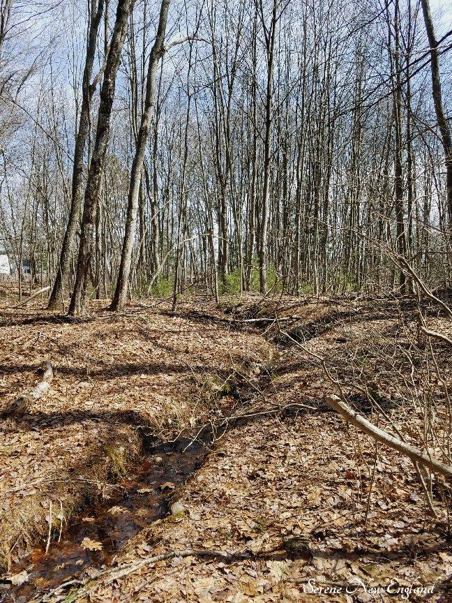 Maine Woods (14).jpg