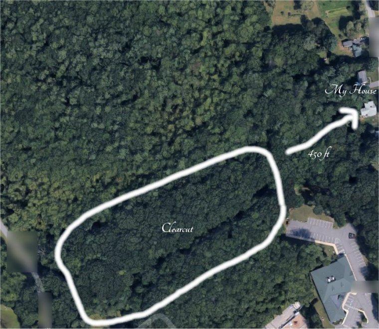 Maine Woods (24).jpg