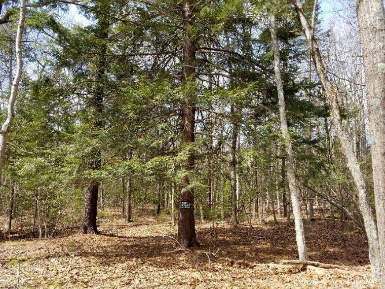 Maine Woods (9).jpg