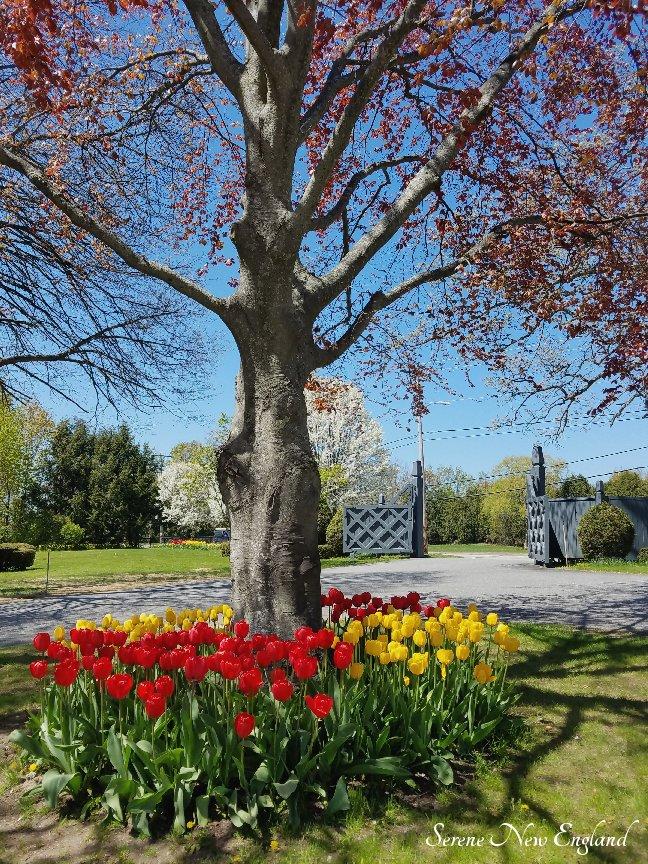 Laurel Hill Cemetery Saco Spring 2018 (1)