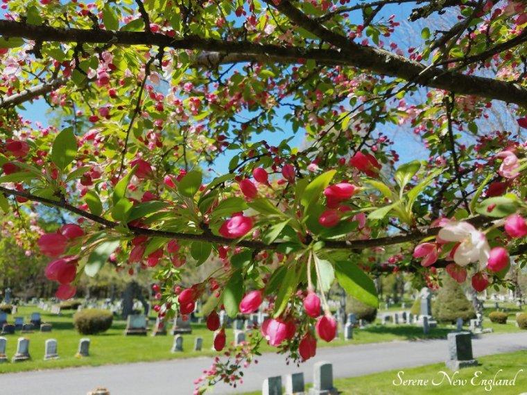 Laurel Hill Cemetery Saco Spring 2018 (13)