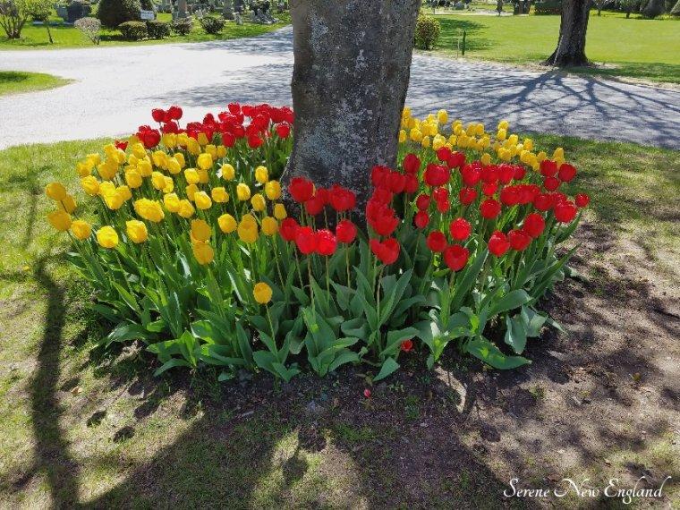 Laurel Hill Cemetery Saco Spring 2018 (2)