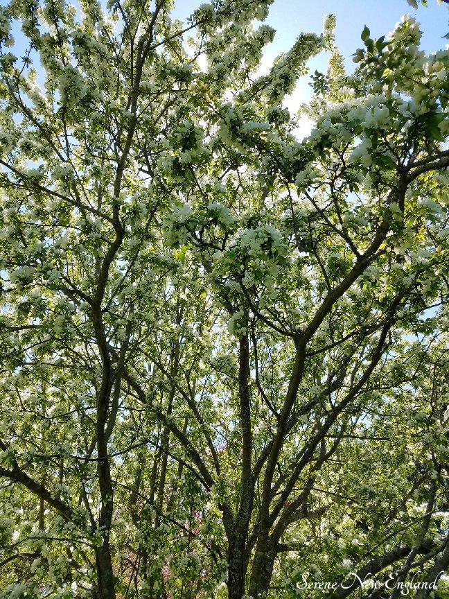 Laurel Hill Cemetery Saco Spring 2018 (28)