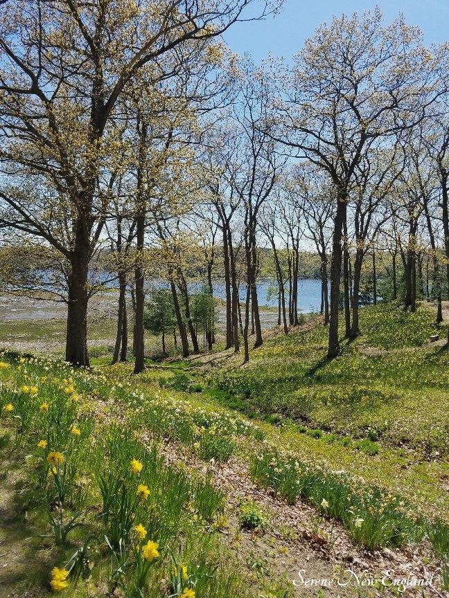 Laurel Hill Cemetery Saco Spring 2018 (35)