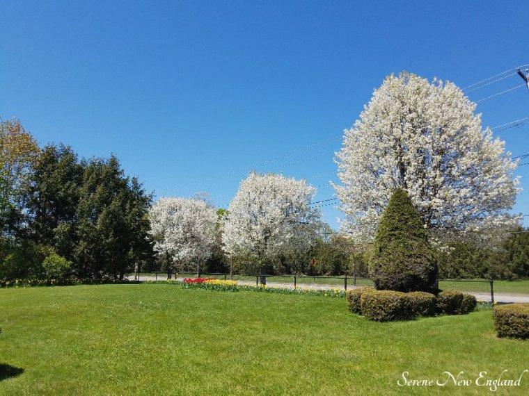Laurel Hill Cemetery Saco Spring 2018 (4)
