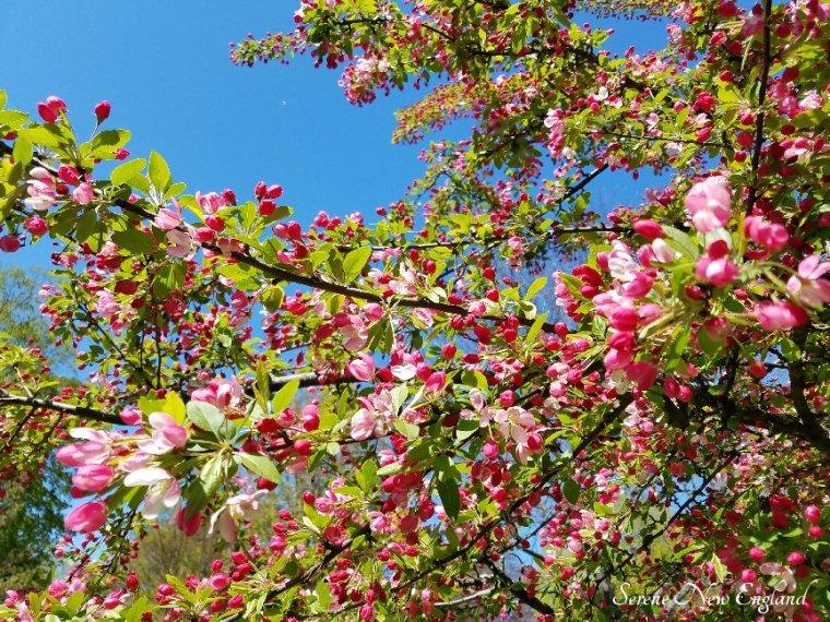Laurel Hill Cemetery Saco Spring 2018 (9)