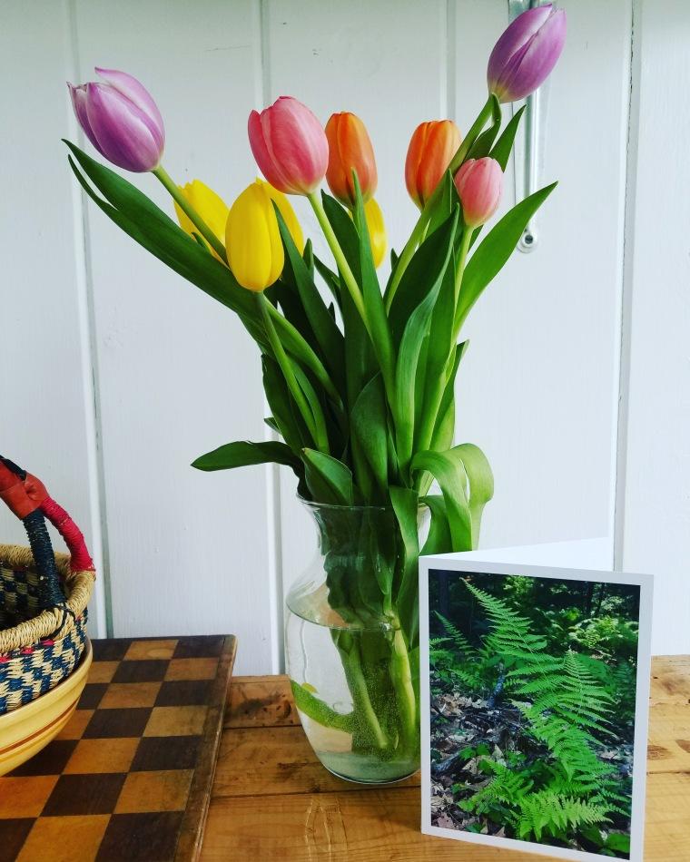 Tulips from Chipmunks.jpg