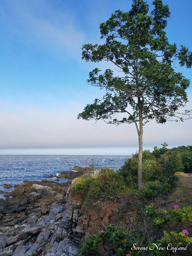 Prouts Neck Cliff Walk Black Point Inn Scarborough Maine (10).jpg