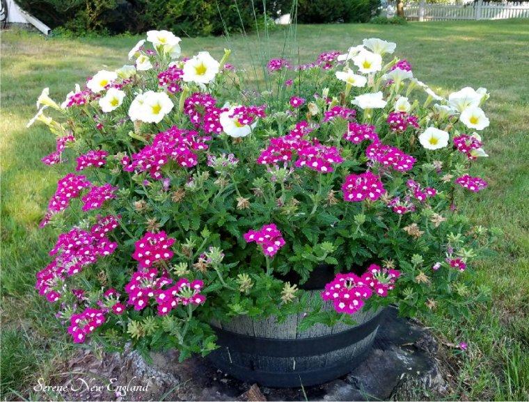 Friday Blessings Serene New England (14).jpg