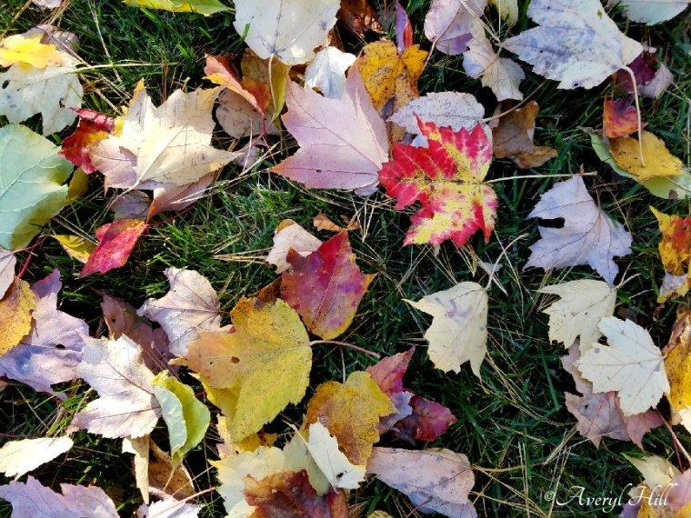 Maine Autumn Final Glow (10).jpg