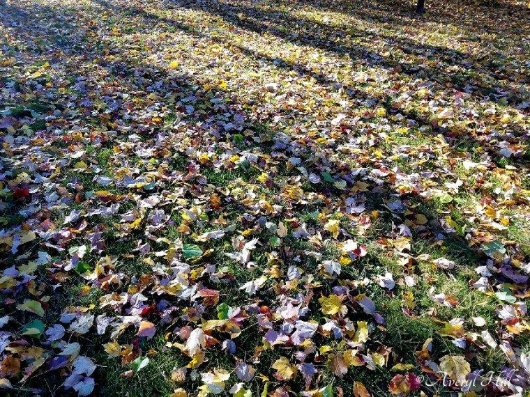 Maine Autumn Final Glow (8).jpg
