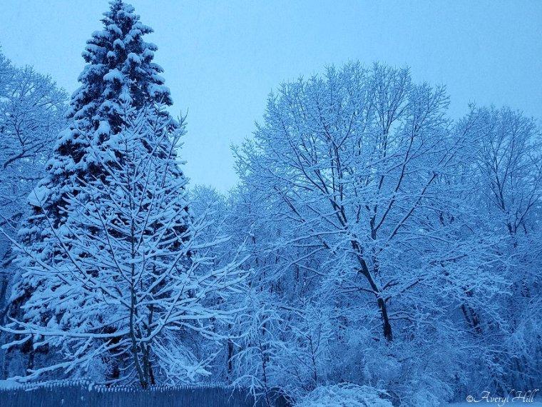 Snowfall at Daybreak in Maine (15)