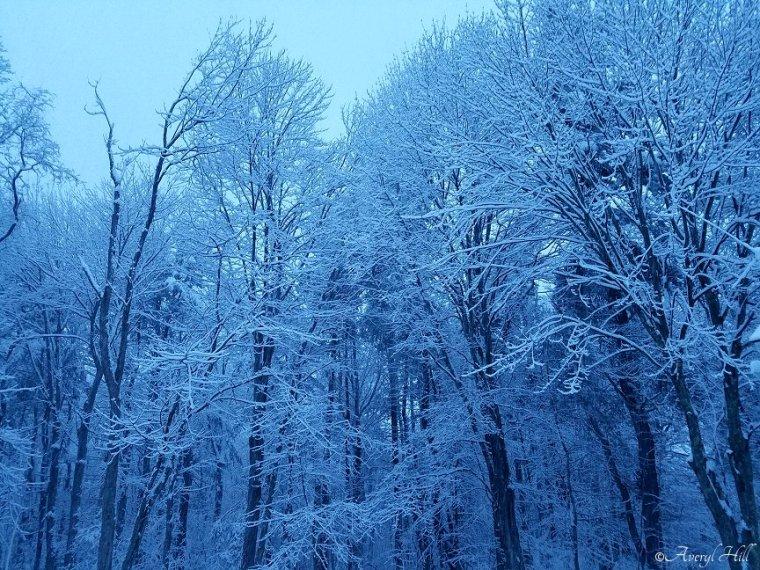 Snowfall at Daybreak in Maine (6)