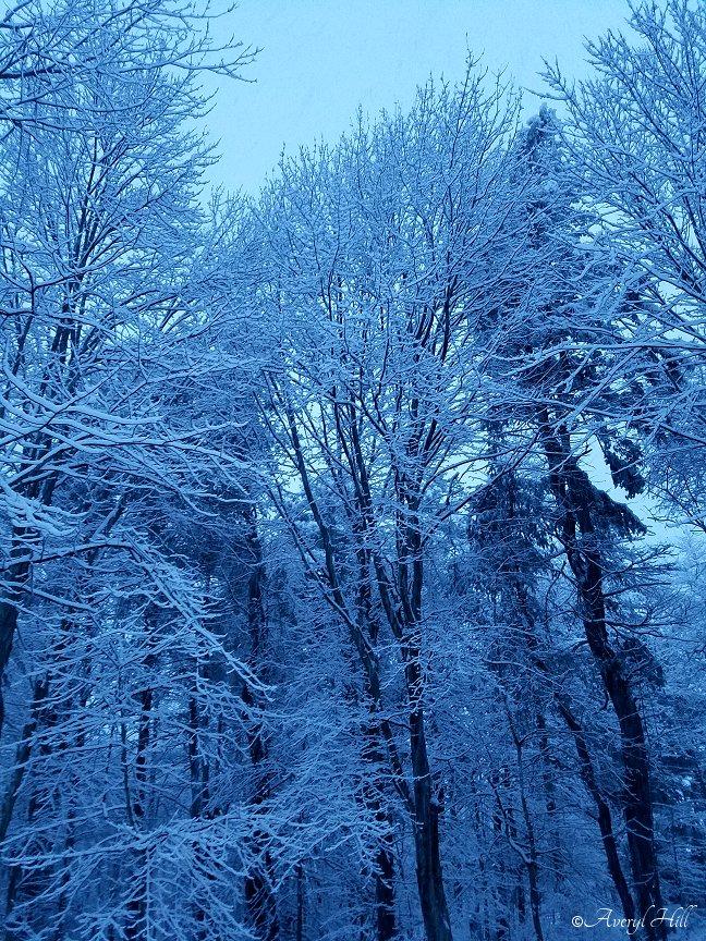 Snowfall at Daybreak in Maine (8)