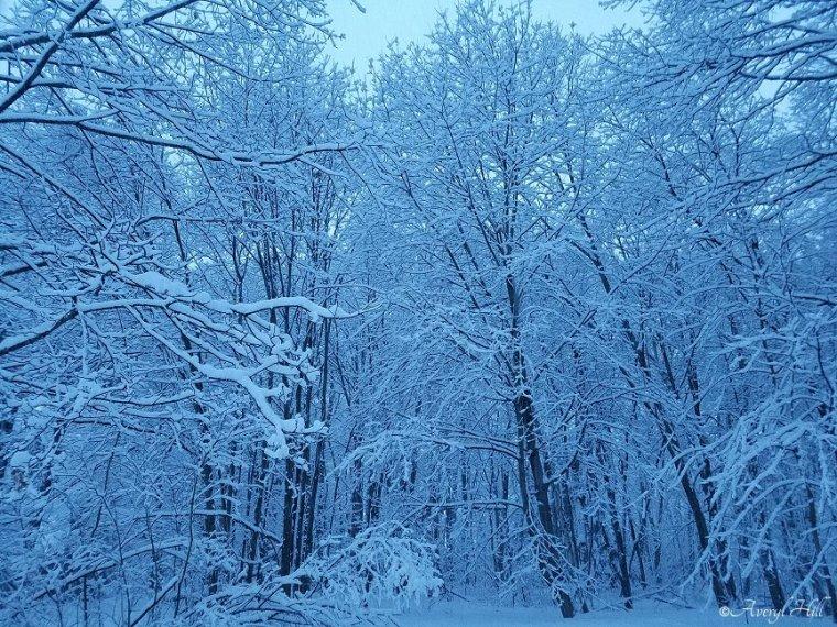 Snowfall at Daybreak in Maine (9)