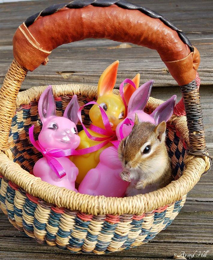 Gods Creatures Easter (4).jpg