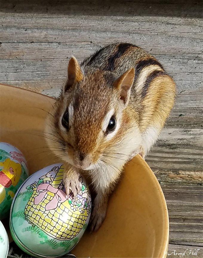 Chipmunk leaning on vintage Easter egg