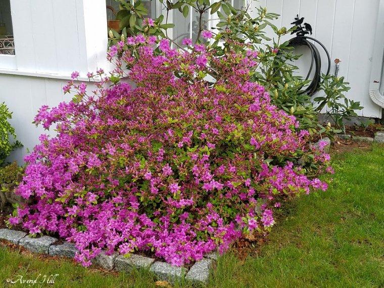 Maine Gardening (16).jpg