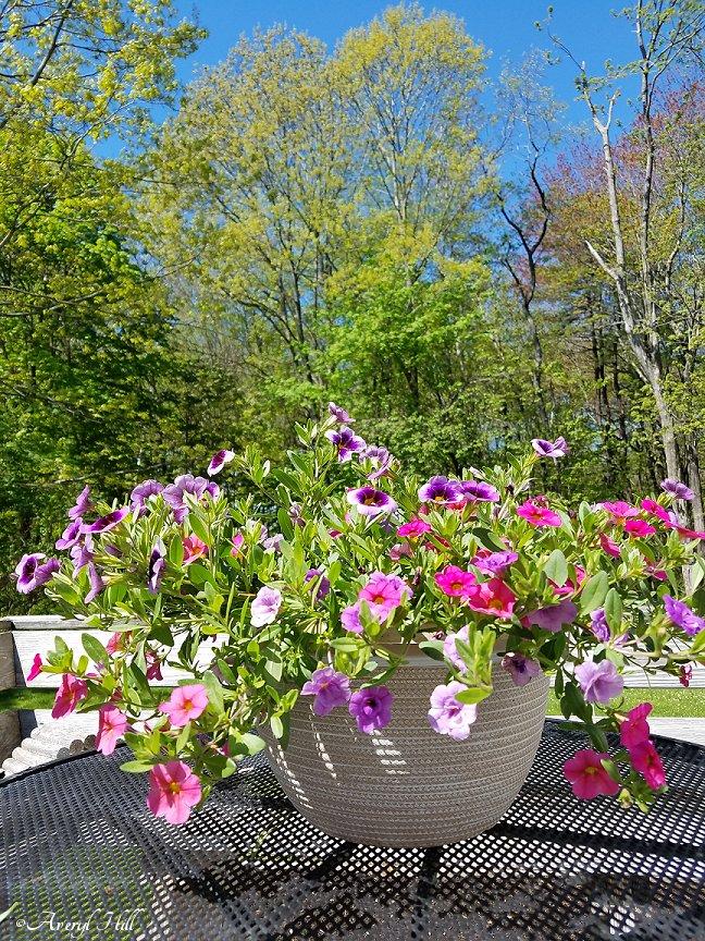 Maine Gardening (17).jpg
