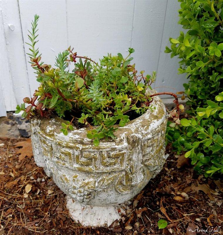 Maine Gardening (2).jpg