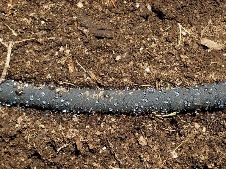 Maine Gardening (20).jpg