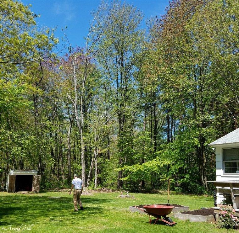 Maine Gardening (28)