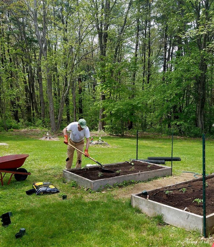 Maine Gardening (29).jpg