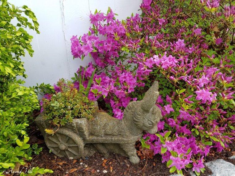 Maine Gardening (5).jpg