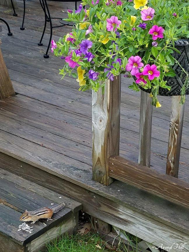 Maine Gardening (8).jpg