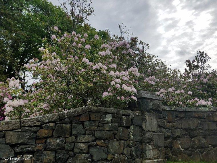 Franciscan Monastery Kennebunk Maine (60)