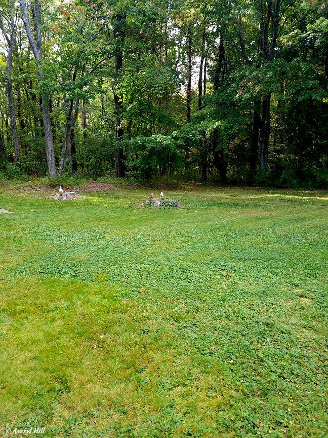 Frual Lawn Care.jpg