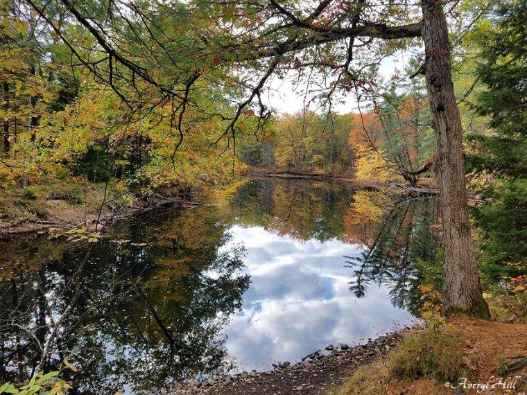 Maine Peak Foliage Leaf Peeping 2019 (1)