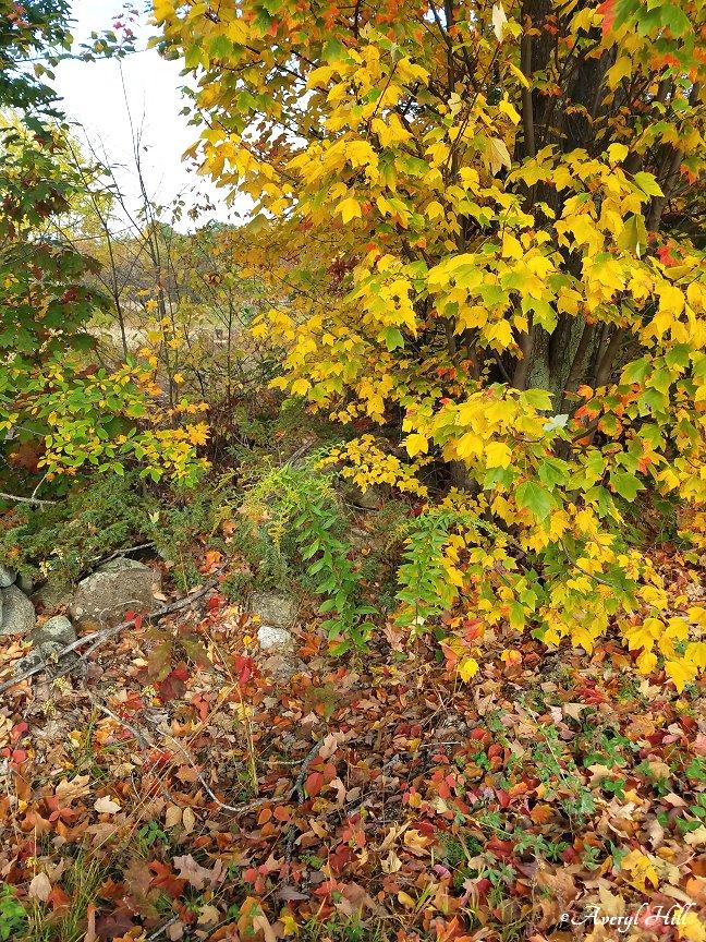 Maine Peak Foliage Leaf Peeping 2019 (12)