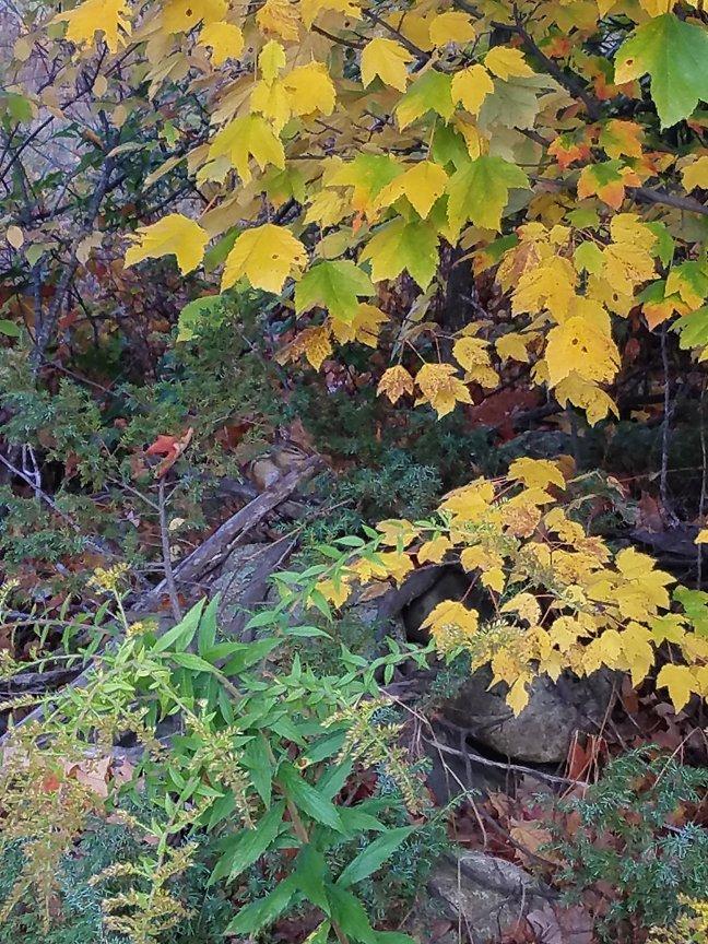 Maine Peak Foliage Leaf Peeping 2019 (13)