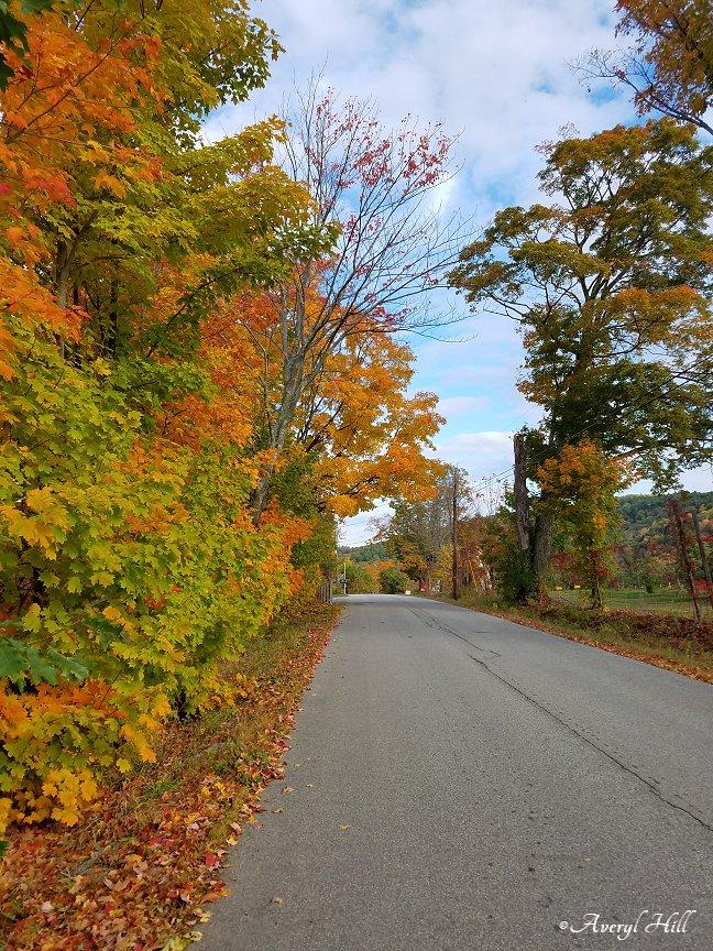 Maine Peak Foliage Leaf Peeping 2019 (14)